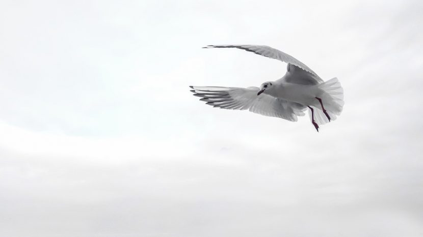 gull fliegen
